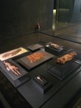 Chinchorro mummies from Northern Chile